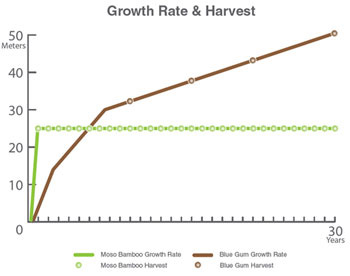 Bamboo Growth Chart
